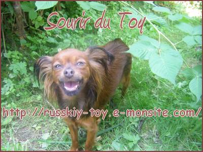 Sourir du Toy