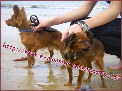 Alice & Darsik a la plage (Bretagne)